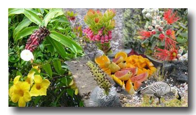 ハワイの花001