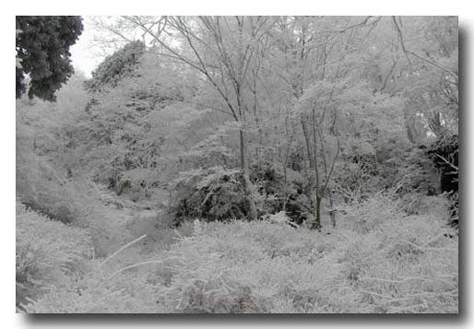 明神の滝08.1.27001
