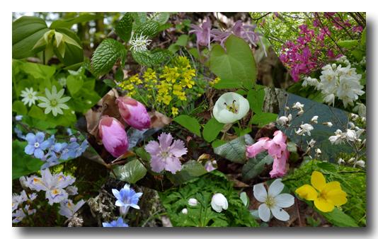 10.05.18横山岳の花